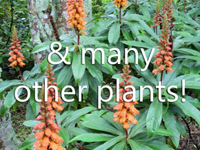 and many other plants