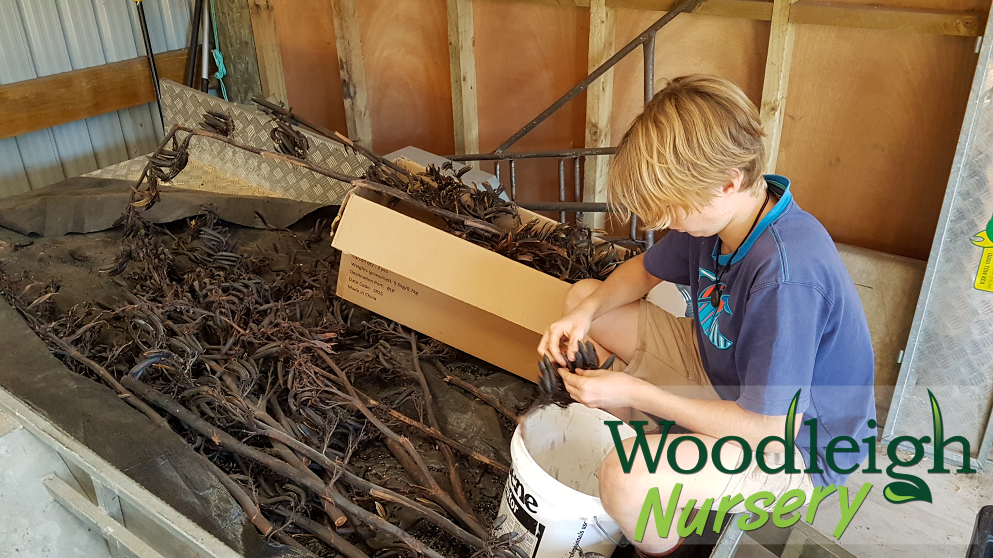 Lodi processing flax during lockdown